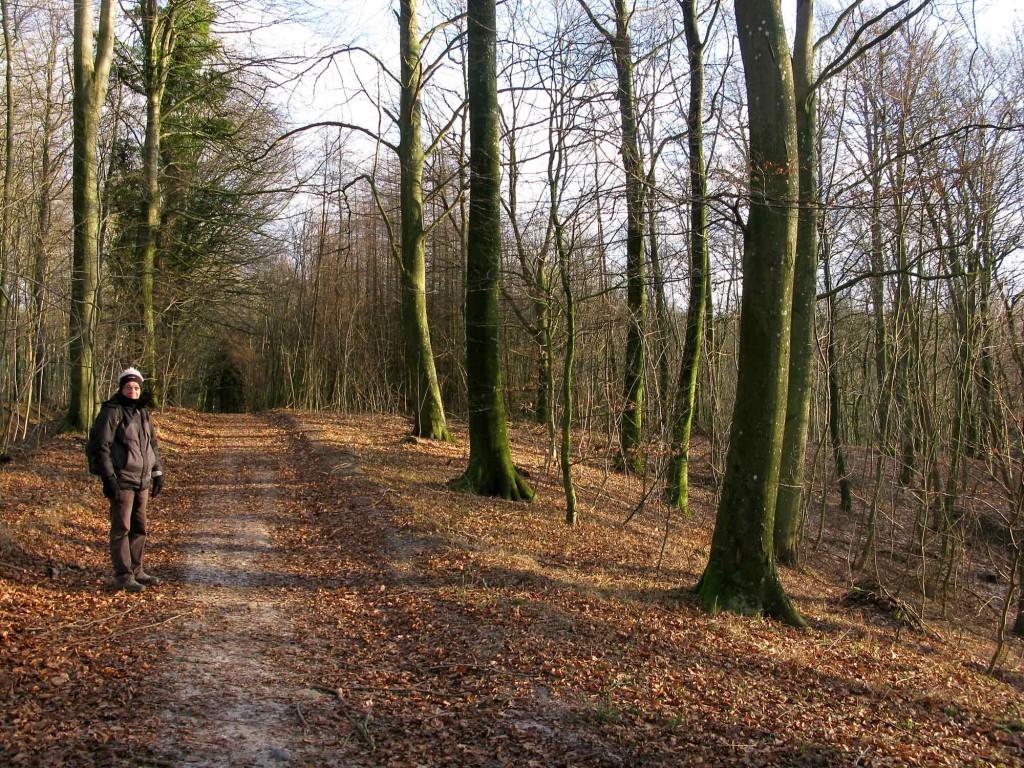 januar-i-skoven